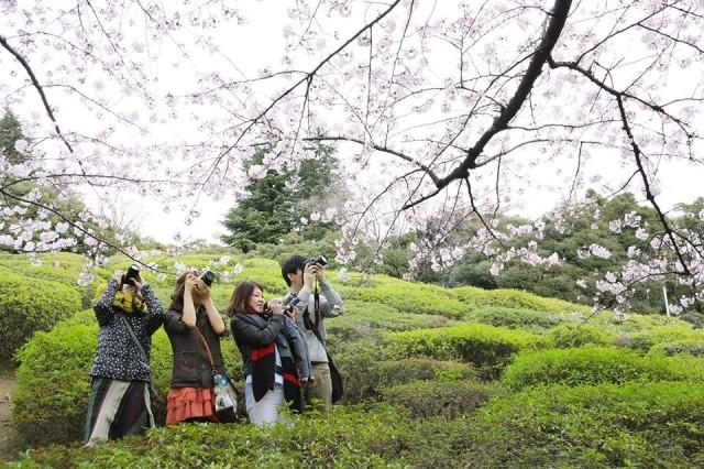 Photo © Satoko Noguchi